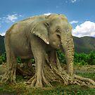 Elephant Tree by Shai Biran
