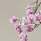 Magnolia in front of a wall by Oleksii Rybakov