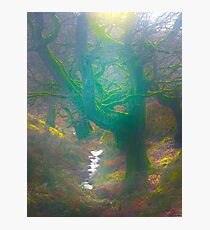 The Dingley Dell of Sugar Loaf Mountain Photographic Print
