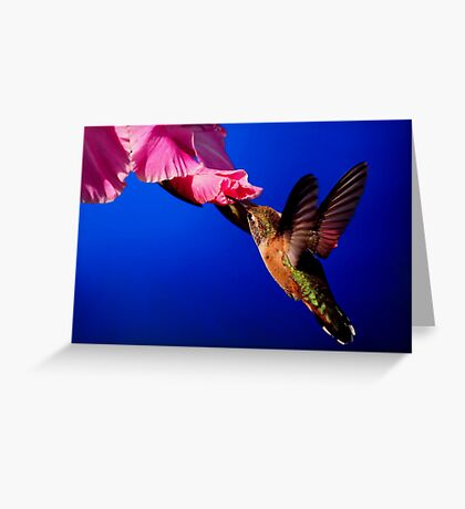 HUMMINGBIRD DELIGHT Greeting Card