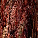 Redwood Bark (Macro) by ZWC Photography