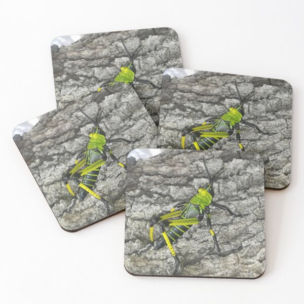 A brightly coloured grasshopper nymph Coasters (Set of 4)