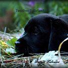 Just taking a little break... by DennisThornton