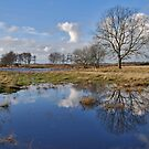 Wet feet on the Vroonpolder.... by Adri  Padmos