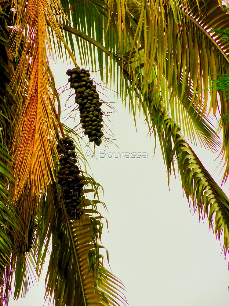 Old Palm by Al Bourassa