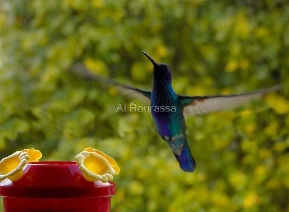 I Hover For Food by Al Bourassa