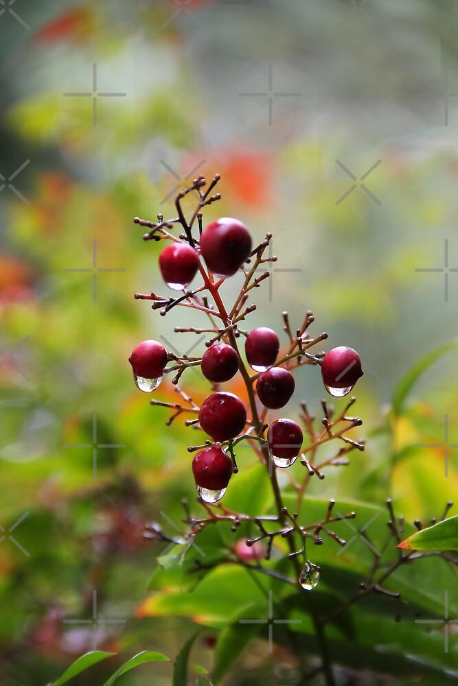 Berries in the Rain-01.10.2013 by Heather Friedman