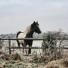Frosty Paddock by Simon Harris