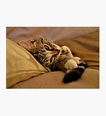 Oh My Tail I Luvz You Photographic Print
