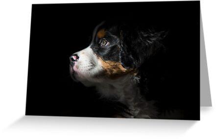 Arya in the shadows by Kerri Gallagher