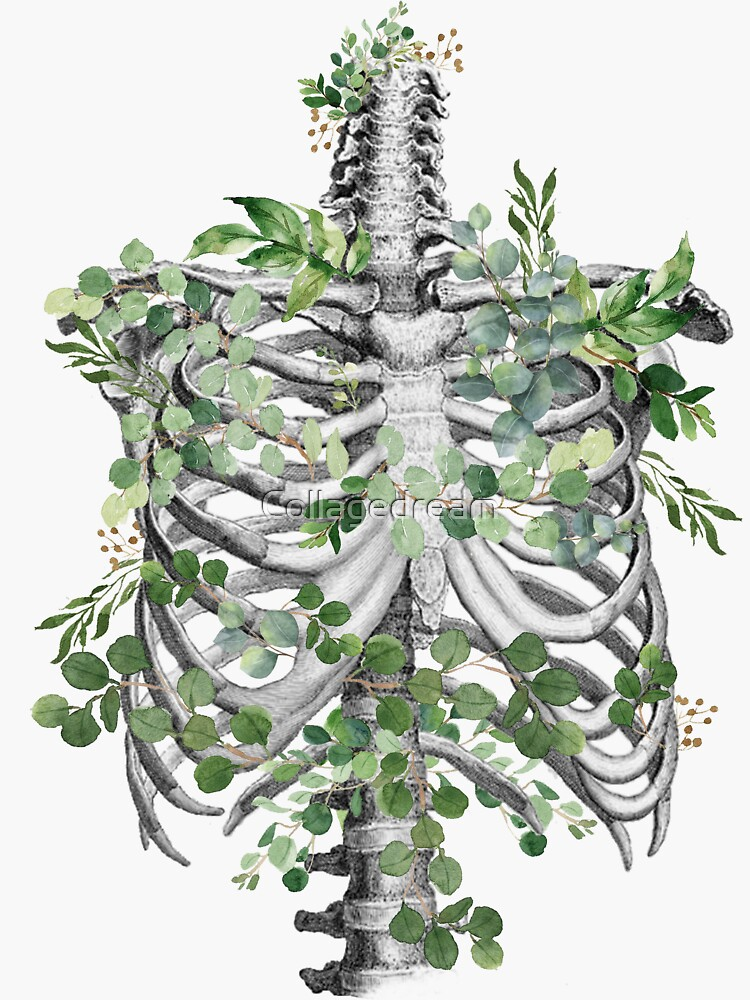 ribcage,rib cage, anatomy skeleton eucaliptus leaves by Collagedream