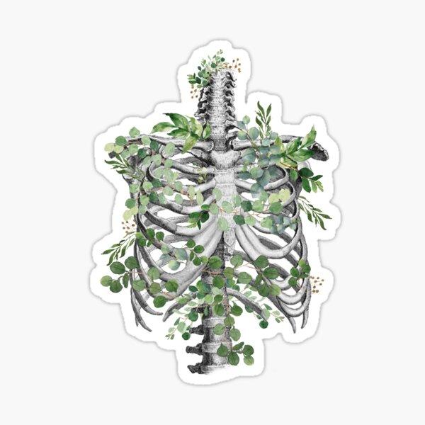 ribcage,rib cage, anatomy skeleton eucaliptus leaves Sticker