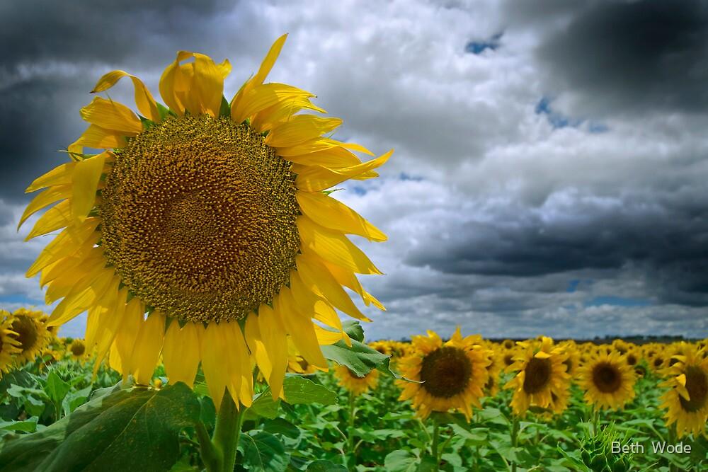 The Happy Flower - Near Toowoomba Qld Australia by Beth  Wode