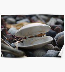Empty Shells Poster