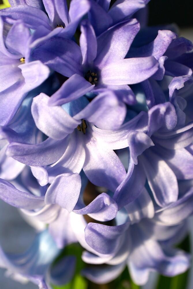 Hyacinth by freshairbaloon