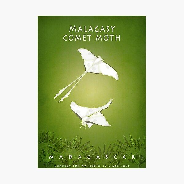 Malagasy comet moth Madagascar wildlife Photographic Print