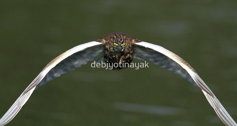 """""""The Indian Pond Heron in flight."""" by debjyotinayak"""