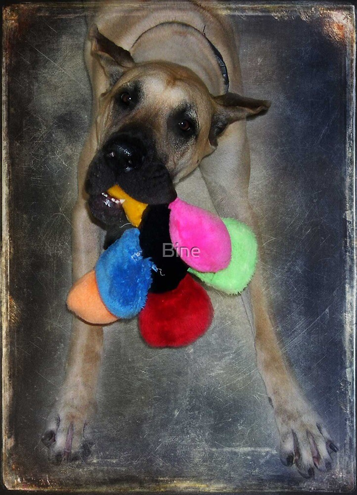 Would you play with me ?  by Bine