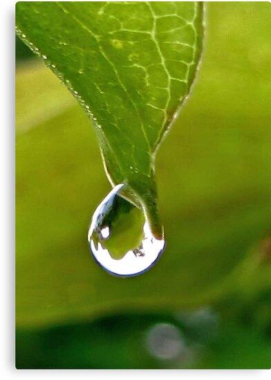 Raindrop by aprilann