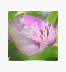 Pink Polygala Myrtifolia in Macro with Green Background  Scarf