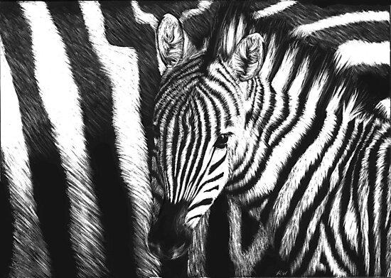Zebra Foal by Heather Ward