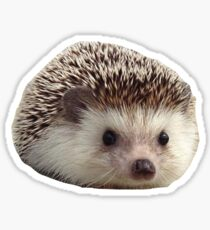 7aeed5d6da58d Hedgehog Christmas Stickers