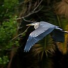 One More Juvenile by Marvin Collins