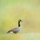 Goose by KathleenRinker