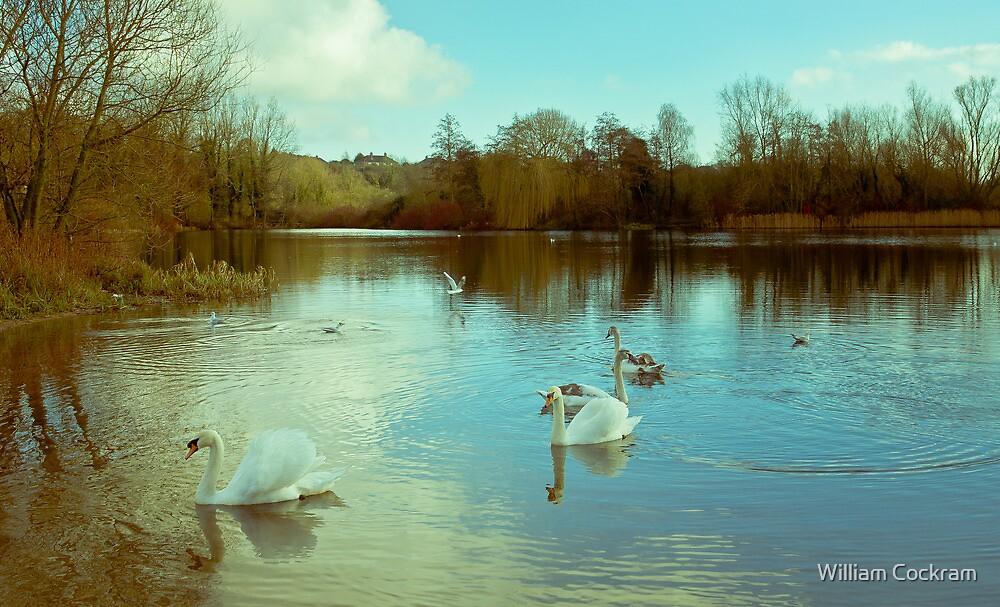 Swan Lake (UEA Broad) by William Cockram