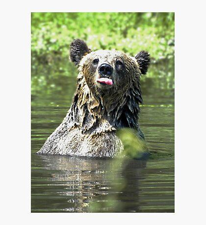 """I Don't Care"" Bear  Card Photographic Print"