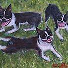 Boston Terriers by Ella Meky