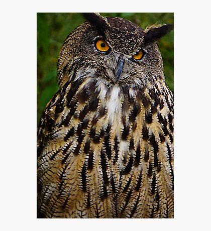 European or Eurasian Eagle Owl Photographic Print