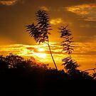 An I-4 Sunset by Caren