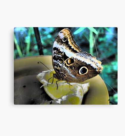 Midday Snack Canvas Print