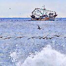 Pelicans Fishing at Sea by Tracy Riddell