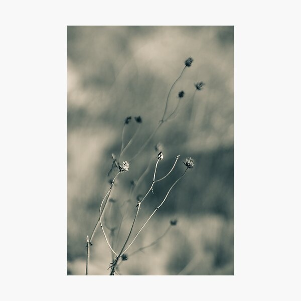 Time is fleeting -  Irwin Prairie Nature Preserve Photographic Print