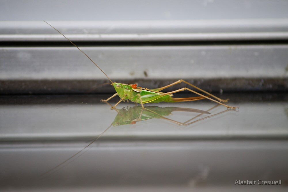 Grasshopper on Glass by Alastair Creswell