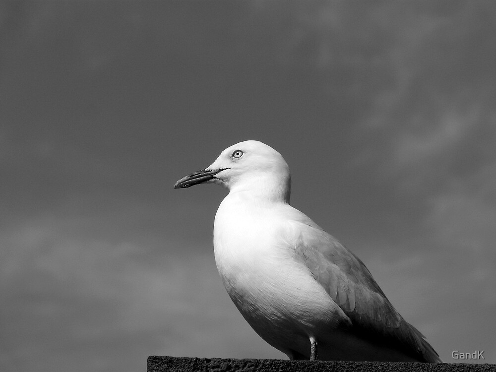 Crown Seagull by GandK
