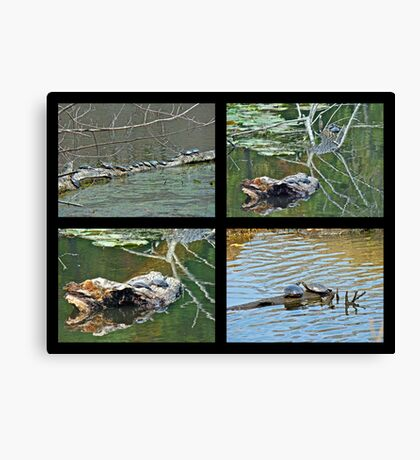 Turtles Rule the Pond Canvas Print