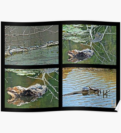 Turtles Rule the Pond Poster