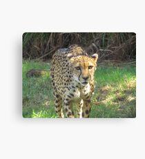 predation Canvas Print