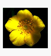 What's Up Buttercup? Photographic Print