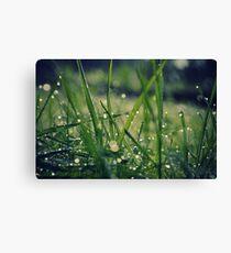 Dew grass Canvas Print