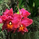 Orchid I by Debra Fedchin
