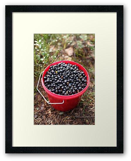 bucket of blueberries by mrivserg