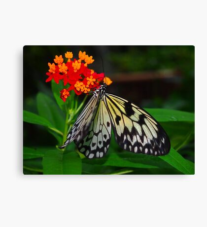 Rice Paper Canvas Print