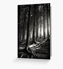 Bucknell Forest Greeting Card