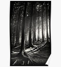 Bucknell Forest Poster