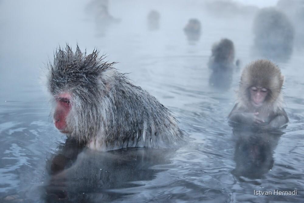 relaxing in the hot springs by Istvan Hernadi