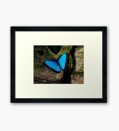 Butterfly Extraordinaire  Framed Print